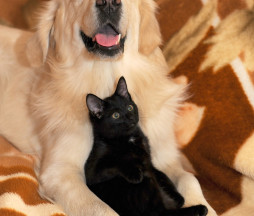 dog-and-cat-2908810_1280