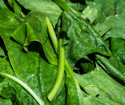 spinach-3463248_1280