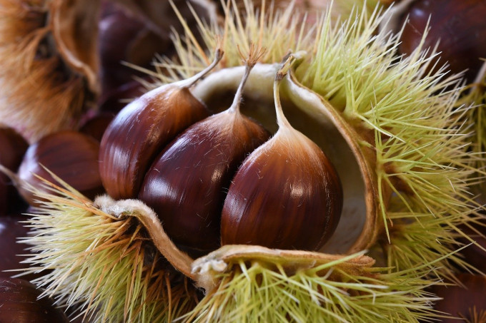 chestnuts-4528127_1280