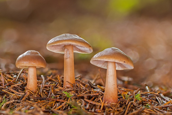 mushrooms-4574729_1280